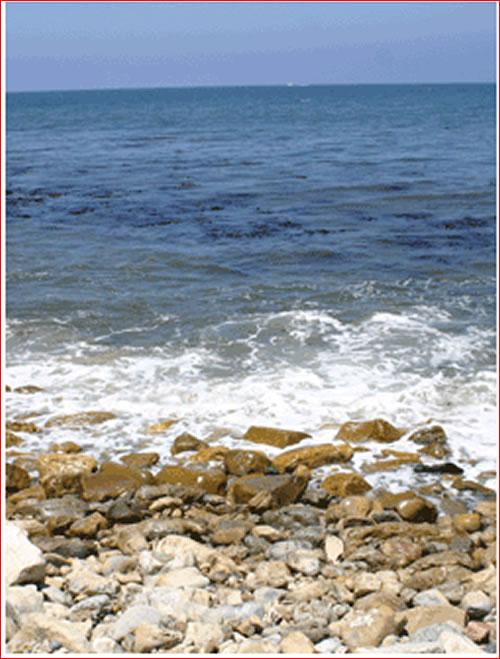 Malaga Cove dive